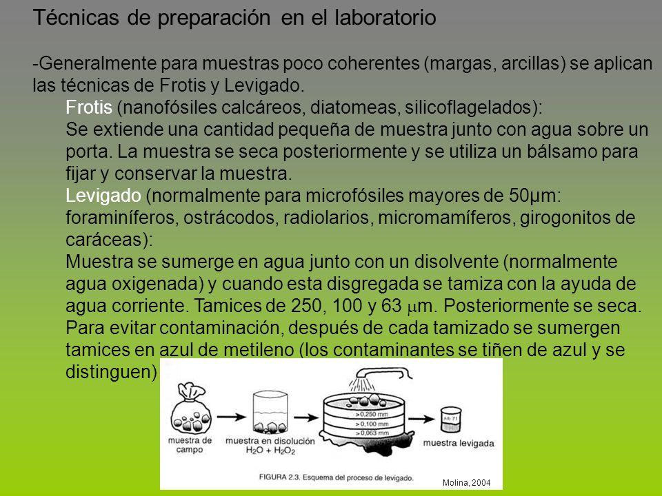 Técnicas de preparación en el laboratorio -Generalmente para muestras poco coherentes (margas, arcillas) se aplican las técnicas de Frotis y Levigado.