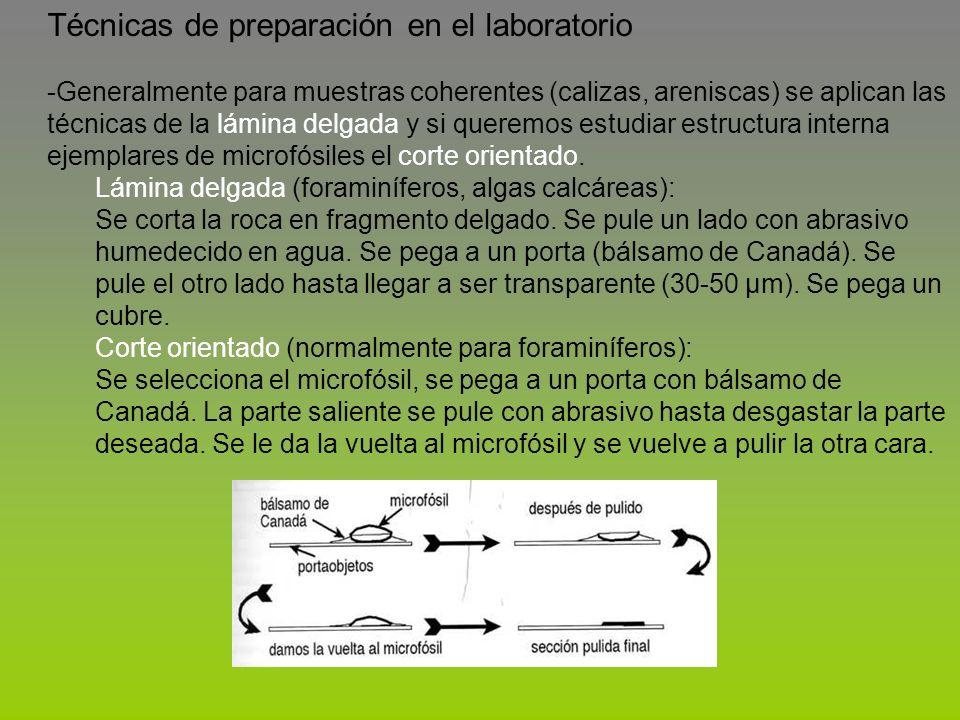 Técnicas de preparación en el laboratorio -Generalmente para muestras coherentes (calizas, areniscas) se aplican las técnicas de la lámina delgada y s