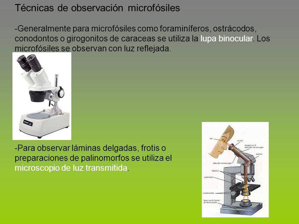 Técnicas de observación microfósiles -Generalmente para microfósiles como foraminíferos, ostrácodos, conodontos o girogonitos de caraceas se utiliza l