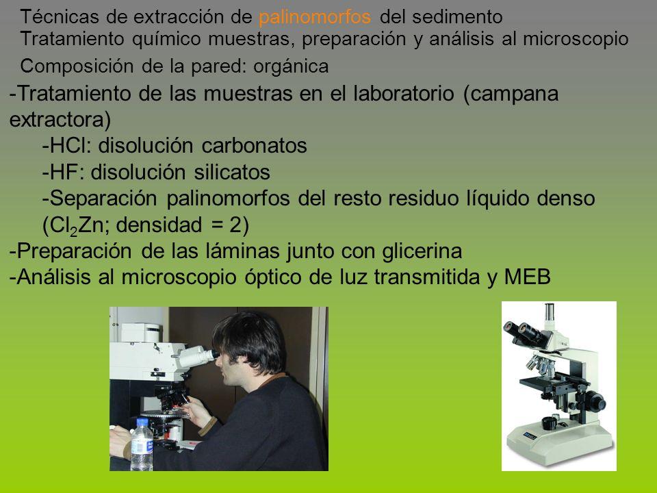 -Tratamiento de las muestras en el laboratorio (campana extractora) -HCl: disolución carbonatos -HF: disolución silicatos -Separación palinomorfos del