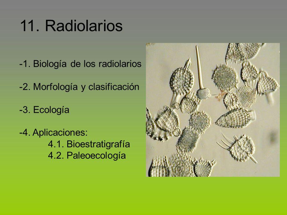 11. Radiolarios -1. Biología de los radiolarios -2. Morfología y clasificación -3. Ecología -4. Aplicaciones: 4.1. Bioestratigrafía 4.2. Paleoecología