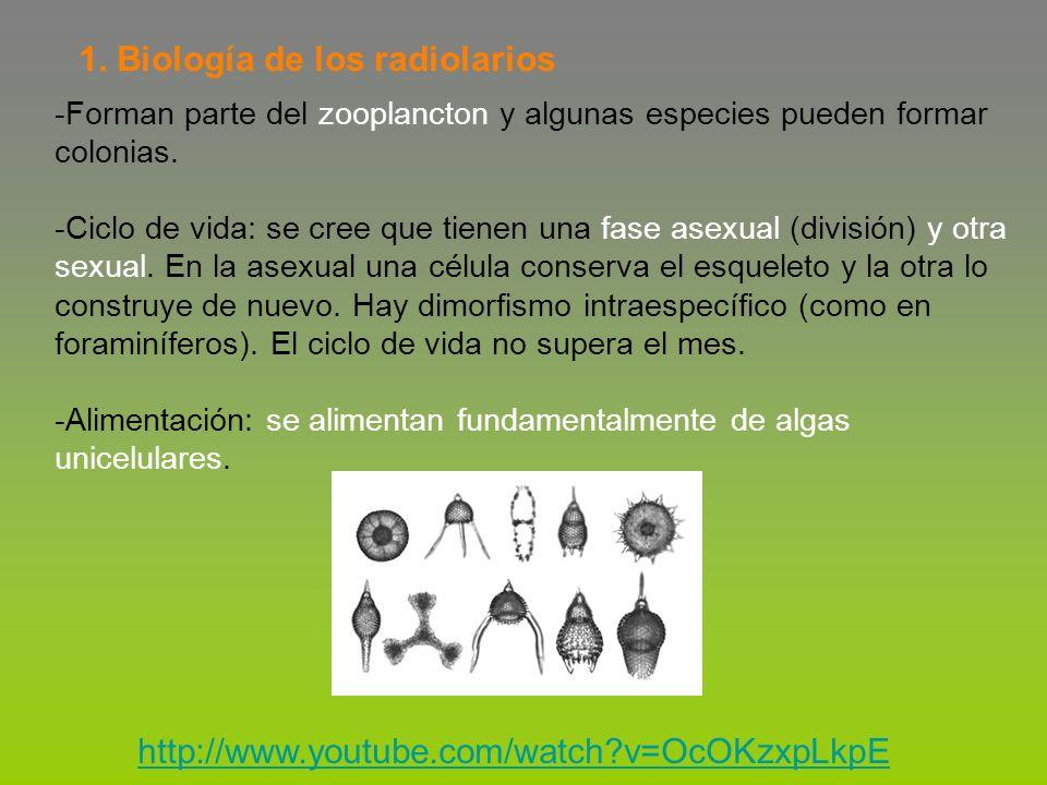 Radiolarios formadores del zooplancton actual