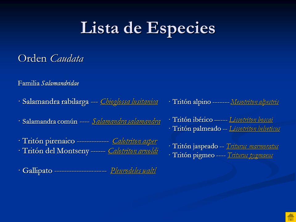 Lista de Especies Orden Salientia Familia Discoglossidae Subfamilia Alytinae Subfamilia Alytinae · Sapo partero ibérico -------------- Alytes cisternasii Alytes cisternasiiAlytes cisternasii · Sapo partero bético –---------- Alytes dickhilleni Alytes dickhilleniAlytes dickhilleni · Sapo partero común ------------ Alytes obstetricans Alytes obstetricansAlytes obstetricans · Sapillo balear ---------------------- Alytes muletensis Alytes muletensisAlytes muletensis Subfamilia Discoglossinae Subfamilia Discoglossinae · Sapillo pintojo ibérico ------- Discoglossus galganoi Discoglossus galganoiDiscoglossus galganoi · Sapillo pintojo meridional --Discoglossus jeanneae Discoglossus jeanneaeDiscoglossus jeanneae · Sapillo mediterráneo ------------ Discoglossus pictus Discoglossus pictusDiscoglossus pictus Familia Pelobatidae · Sapo de espuelas ----------------- Pelobates cultripes Pelobates cultripesPelobates cultripes Familia Pelodytidae · Sapillo moteado común ------- Pelodytes punctatus Pelodytes punctatusPelodytes punctatus · Sapillo moteado ibérico ---------- Pelodytes ibericus Pelodytes ibericusPelodytes ibericus Familia Bufonidae · Sapo común ---------------------------------- Bufo bufoBufo bufo · Sapo corredor --------------------------- Bufo calamitaBufo calamita · Sapo verde ---------------------------------- Bufo viridisBufo viridis · Sapo moruno ----------------------- Bufo mauritanicusBufo mauritanicus Familia Hylidae · Ranita de San Antonio ----------------- Hyla arboreaHyla arborea · Ranita meridional ------------------- Hyla meridionalisHyla meridionalis Familia Ranidae · Rana ágil ------------------------------- Rana dalmatinaRana dalmatina · Rana patilarga ----------------------------- Rana ibericaRana iberica · Rana pirenaica ------------------------- Rana pyrenaicaRana pyrenaica · Rana bermeja ------------------------- Rana temporariaRana temporaria · Rana común ------------------------------- Rana pereziRana perezi · Rana toro --------------------------