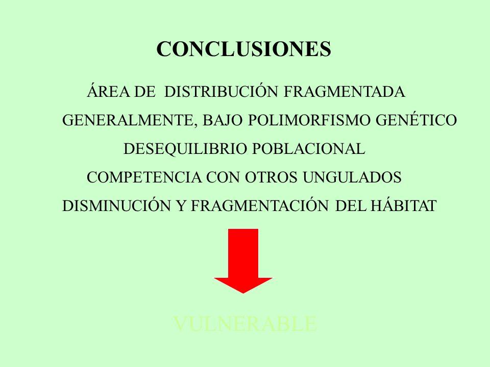 ÁREA DE DISTRIBUCIÓN FRAGMENTADA VULNERABLE CONCLUSIONES GENERALMENTE, BAJO POLIMORFISMO GENÉTICO DESEQUILIBRIO POBLACIONAL COMPETENCIA CON OTROS UNGU