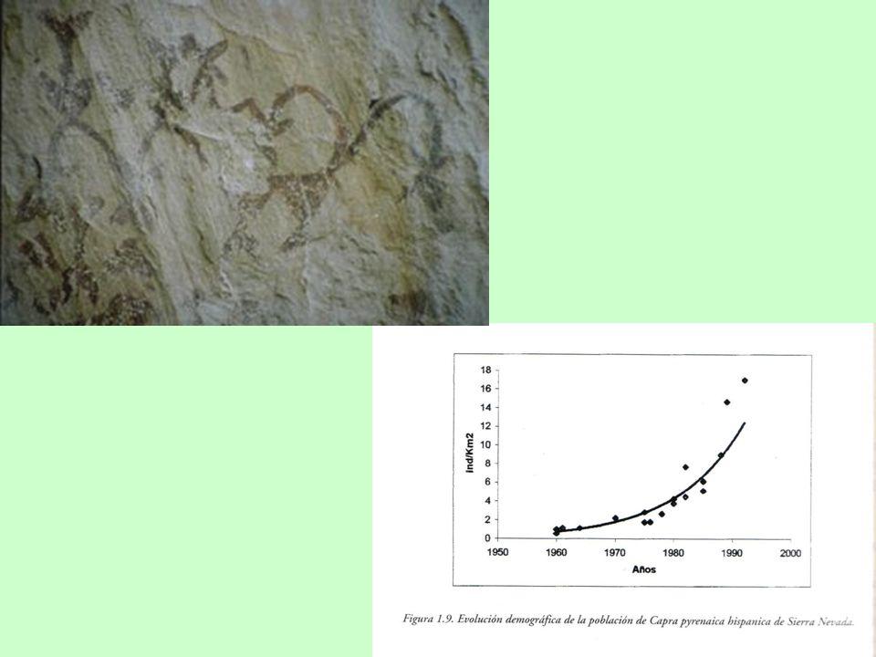 Hábitat de la cabra montés 30.04 hab./Km 2 1271.4 msnm Espacios protegidos: 4751.4 Km 2 (49.8% del hábitat) 9523.4 Km 2 (10.9% Andalucía)