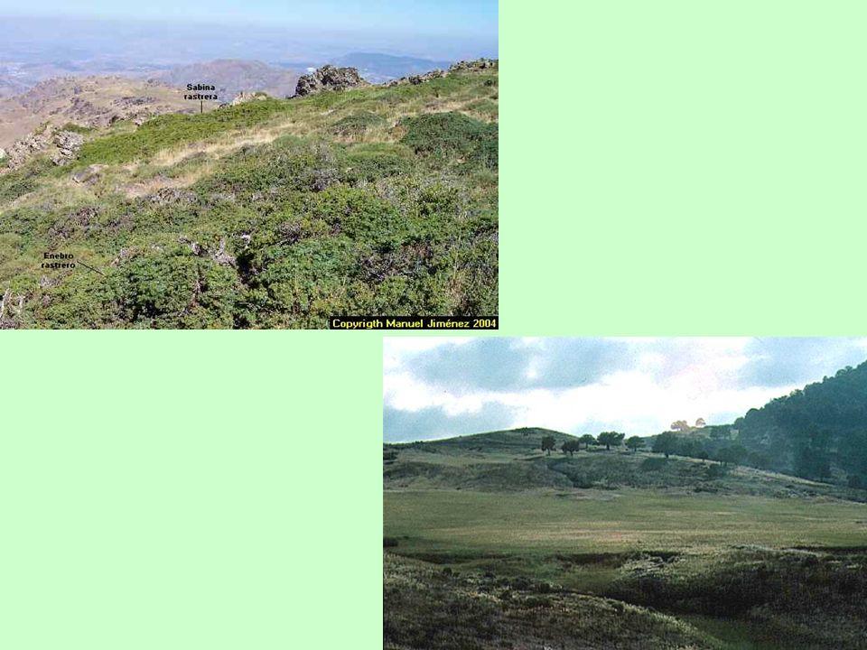 Dinámica estacional de la prevalencia de la sarna sarcóptica en Sierra Nevada