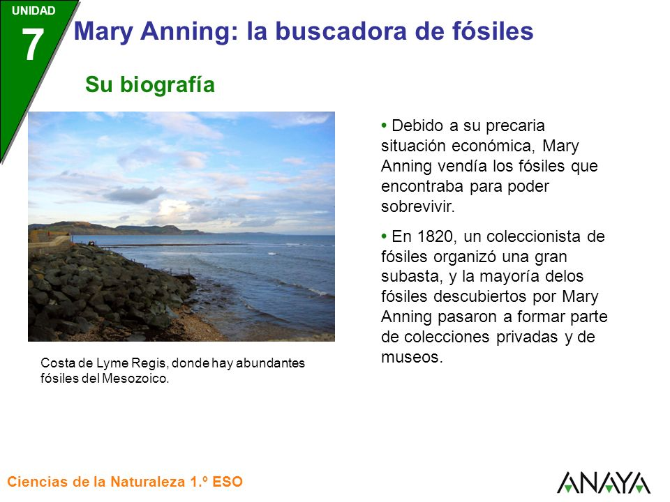 UNIDAD 3 Ciencias de la Naturaleza 1.º ESO UNIDAD 7 Mary Anning: la buscadora de fósiles Su biografía Debido a su precaria situación económica, Mary A