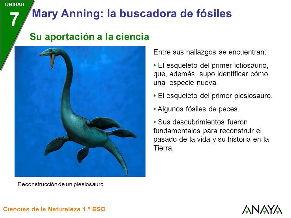 UNIDAD 3 Ciencias de la Naturaleza 1.º ESO UNIDAD 7 Mary Anning: la buscadora de fósiles Entre sus hallazgos se encuentran: El esqueleto del primer ic