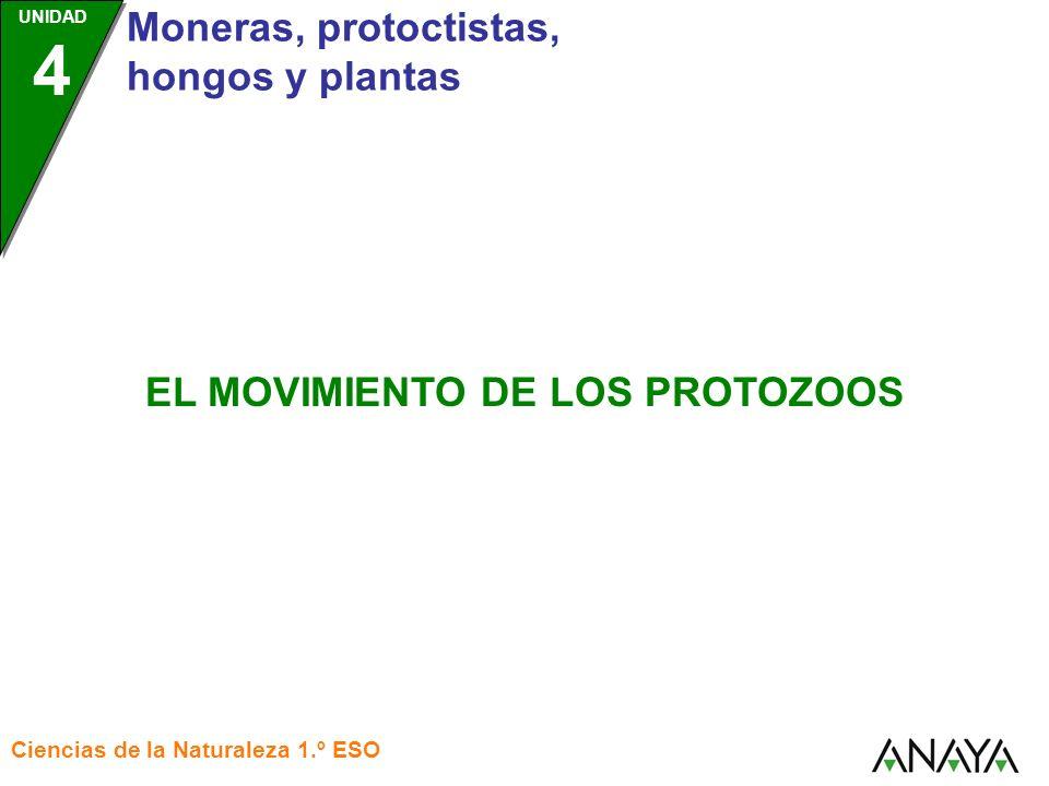 UNIDAD 4 Moneras, protoctistas, hongos y plantas Ciencias de la Naturaleza 1.º ESO EL MOVIMIENTO DE LOS PROTOZOOS