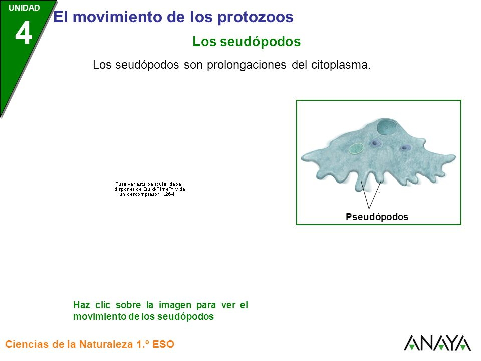 UNIDAD 3 El movimiento de los protozoos Ciencias de la Naturaleza 1.º ESO UNIDAD 4 Los seudópodos Haz clic sobre la imagen para ver el movimiento de l