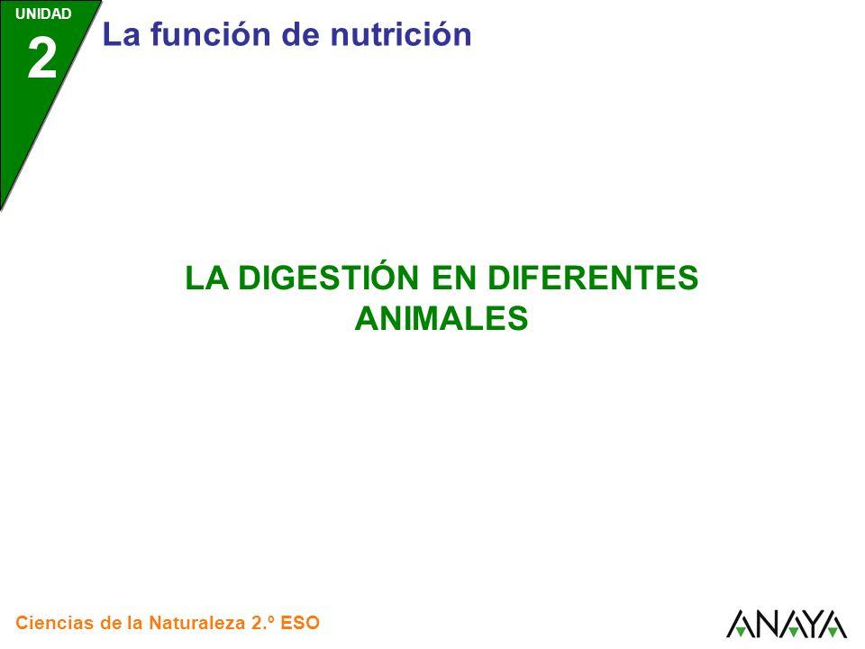 UNIDAD 2 La digestión en diferentes animales Ciencias de la Naturaleza 2.º ESO DIGESTIÓN ANIMALES SIN APARATO DIGESTIVO ANIMALES CON APARATO DIGESTIVO CON CAVIDADES GASTROVASCULARES RUMIANTE CARACOL Pulsa sobre cada recuadro para saber más AVE como CON TUBO DIGESTIVO