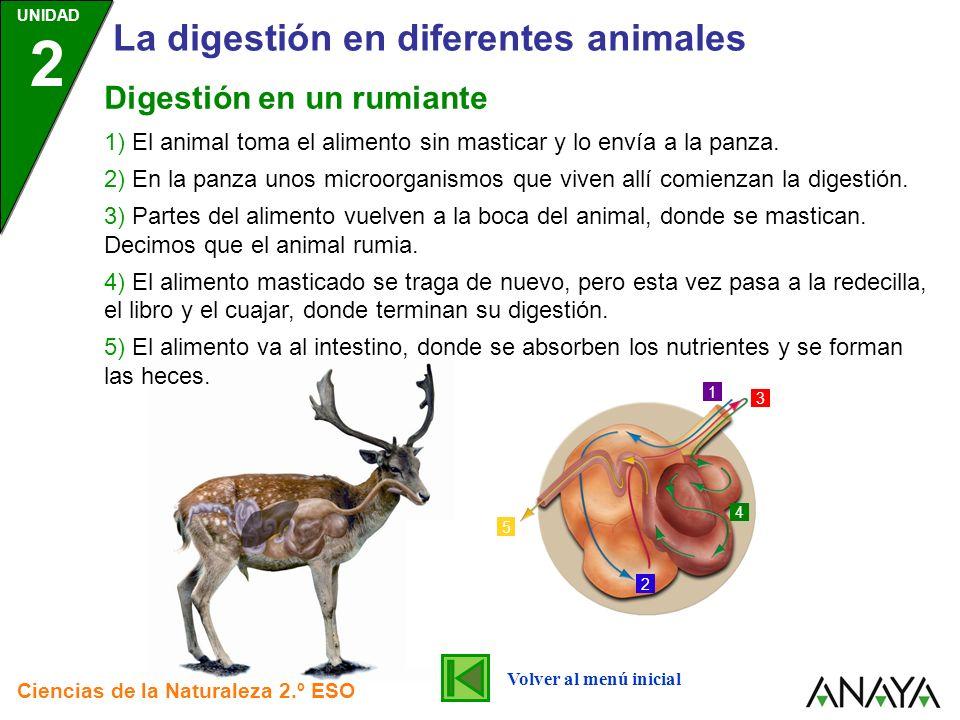 UNIDAD 2 La digestión en diferentes animales Ciencias de la Naturaleza 2.º ESO 1) El animal toma el alimento sin masticar y lo envía a la panza. 2) En
