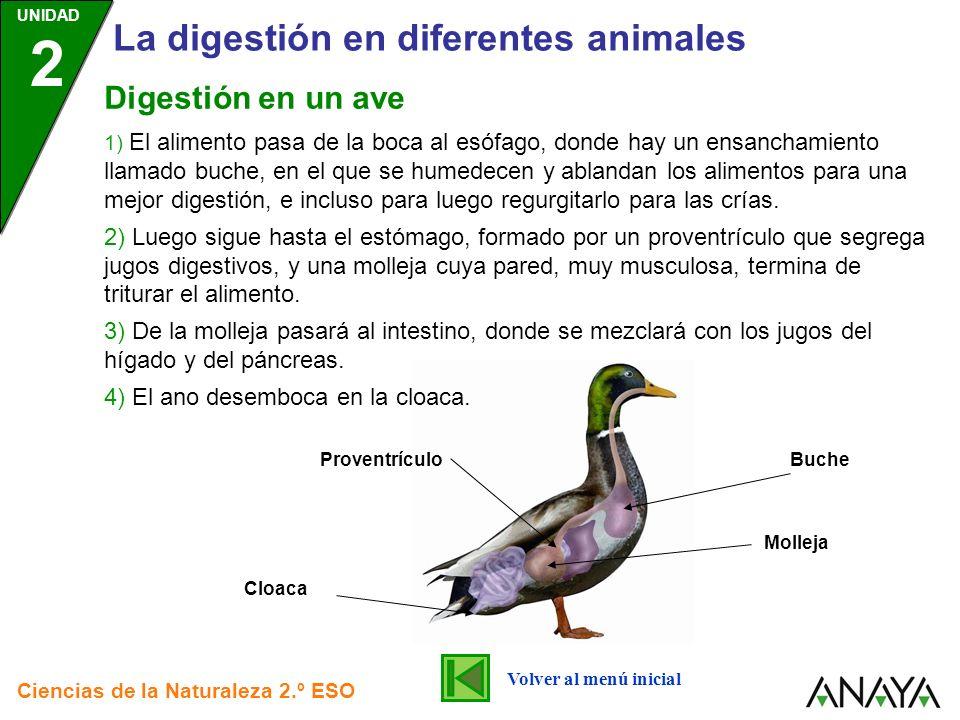 UNIDAD 2 La digestión en diferentes animales Ciencias de la Naturaleza 2.º ESO Volver al menú inicial Digestión en un ave Buche Molleja Cloaca Provent
