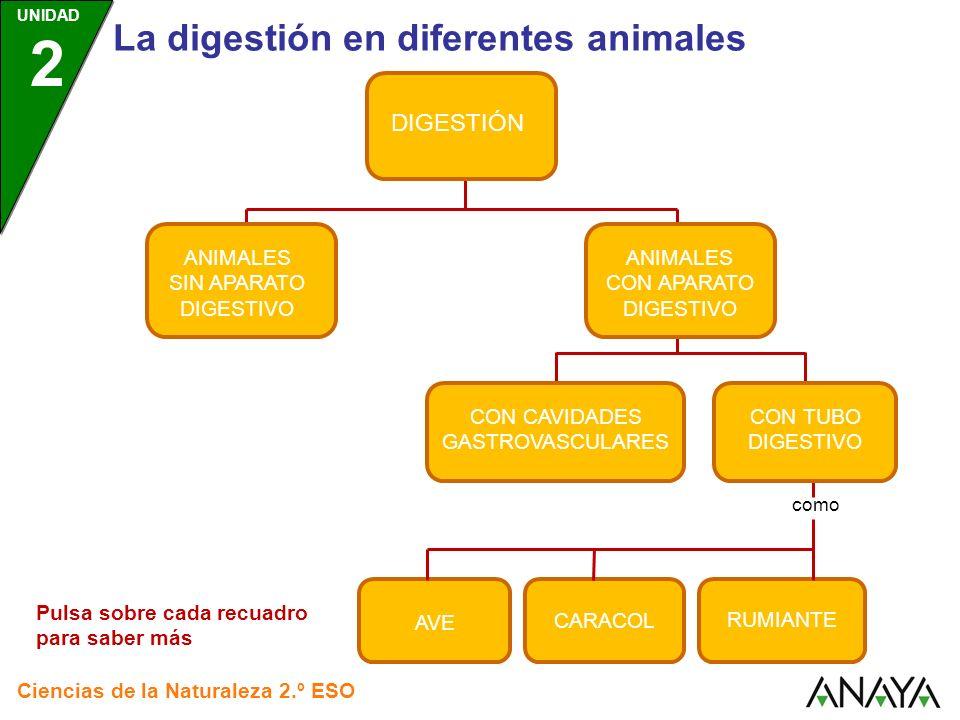 UNIDAD 2 La digestión en diferentes animales Ciencias de la Naturaleza 2.º ESO DIGESTIÓN ANIMALES SIN APARATO DIGESTIVO ANIMALES CON APARATO DIGESTIVO