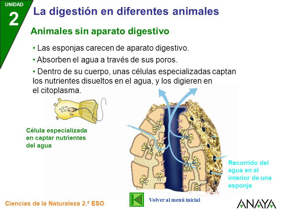 UNIDAD 2 La digestión en diferentes animales Ciencias de la Naturaleza 2.º ESO La digestión con aparato digestivo es propia de la gran mayoría de animales (la excepción son las esponjas).