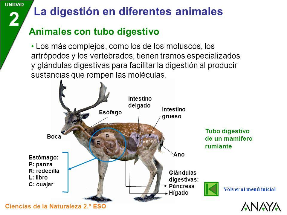 UNIDAD 2 La digestión en diferentes animales Ciencias de la Naturaleza 2.º ESO 1) La digestión comienza cuando el caracol toma los alimentos con una especie de lengua dentada a la que se denomina rádula.