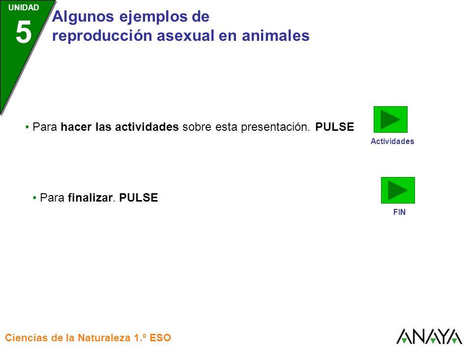 UNIDAD 3 Algunos ejemplos de reproducción asexual en animales Ciencias de la Naturaleza 1.º ESO UNIDAD 5 Actividades Para hacer las actividades sobre
