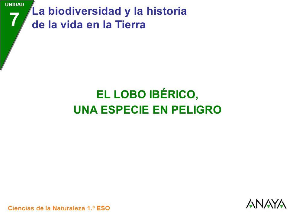 UNIDAD 7 La biodiversidad y la historia de la vida en la Tierra Ciencias de la Naturaleza 1.º ESO EL LOBO IBÉRICO, UNA ESPECIE EN PELIGRO
