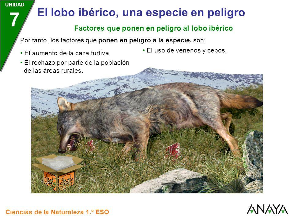 UNIDAD 3 Ciencias de la Naturaleza 1.º ESO UNIDAD 7 El lobo ibérico, una especie en peligro Los factores que afectan al ecosistema del lobo, son: Factores que ponen en peligro al lobo ibérico La construcción de carreteras.