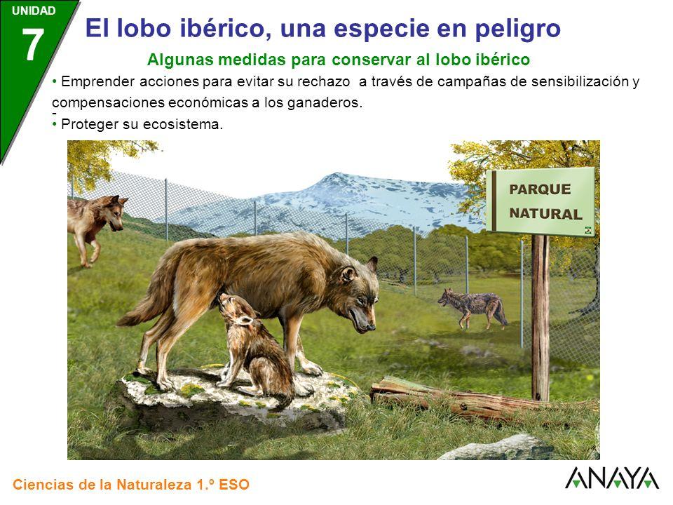 UNIDAD 3 Ciencias de la Naturaleza 1.º ESO UNIDAD 7 El lobo ibérico, una especie en peligro Algunas medidas para conservar al lobo ibérico Proteger su