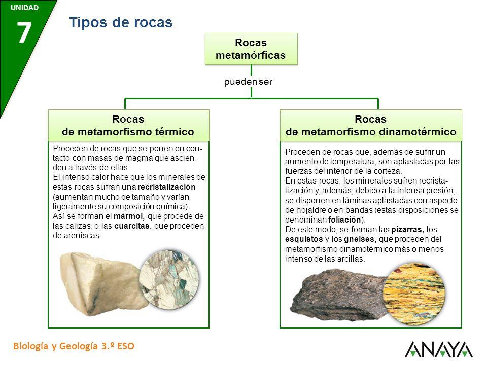 Rocas metamórficas pueden ser Rocas de metamorfismo dinamotérmico Proceden de rocas que, además de sufrir un aumento de temperatura, son aplastadas por las fuerzas del interior de la corteza.