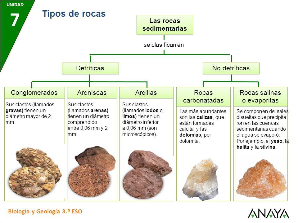 Detríticas Arcillas Sus clastos (llamados lodos o limos) tienen un diámetro inferior a 0,06 mm (son microscópicos). Rocas carbonatadas Las más abundan