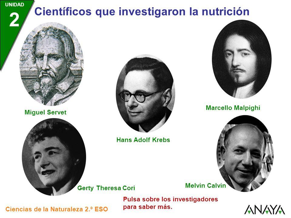 UNIDAD 2 Científicos que investigaron la nutrición Ciencias de la Naturaleza 2.º ESO Miguel Servet Hans Adolf Krebs Melvin Calvin Gerty Theresa Cori M