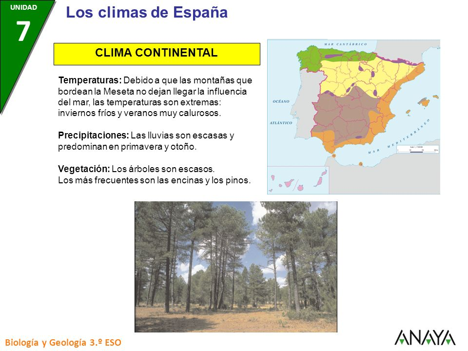 CLIMA CONTINENTAL Precipitaciones: Las lluvias son escasas y predominan en primavera y otoño. Vegetación: Los árboles son escasos. Los más frecuentes