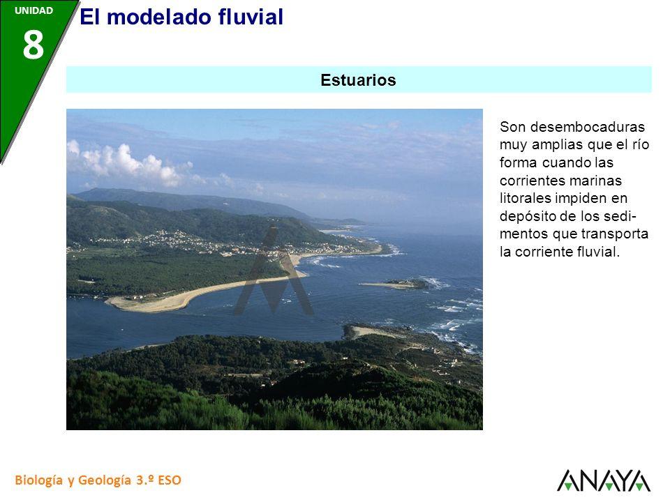 Biología y Geología 3.º ESO Son desembocaduras muy amplias que el río forma cuando las corrientes marinas litorales impiden en depósito de los sedi- m