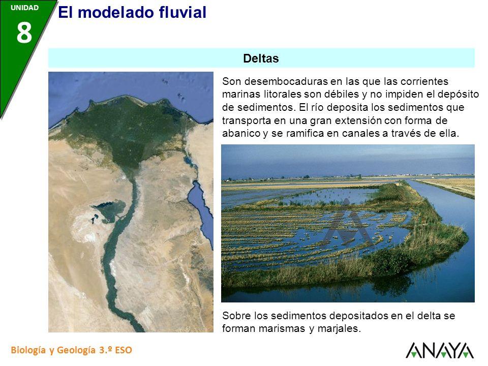 Biología y Geología 3.º ESO Son desembocaduras en las que las corrientes marinas litorales son débiles y no impiden el depósito de sedimentos. El río