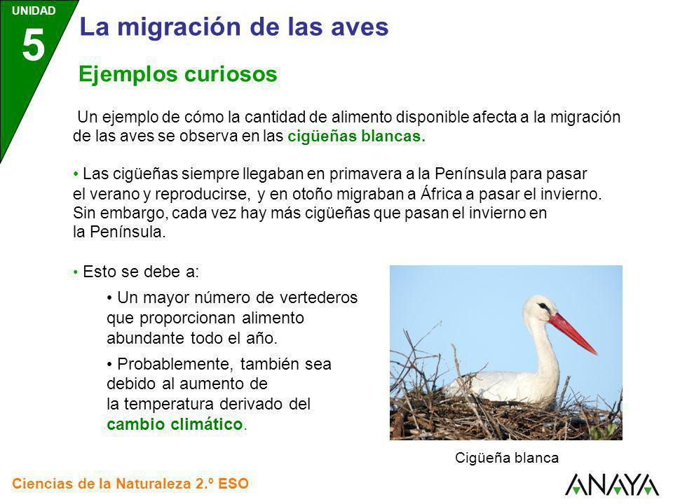 UNIDAD 5 Ciencias de la Naturaleza 2.º ESO Ejemplos curiosos Un ejemplo de cómo la cantidad de alimento disponible afecta a la migración de las aves s