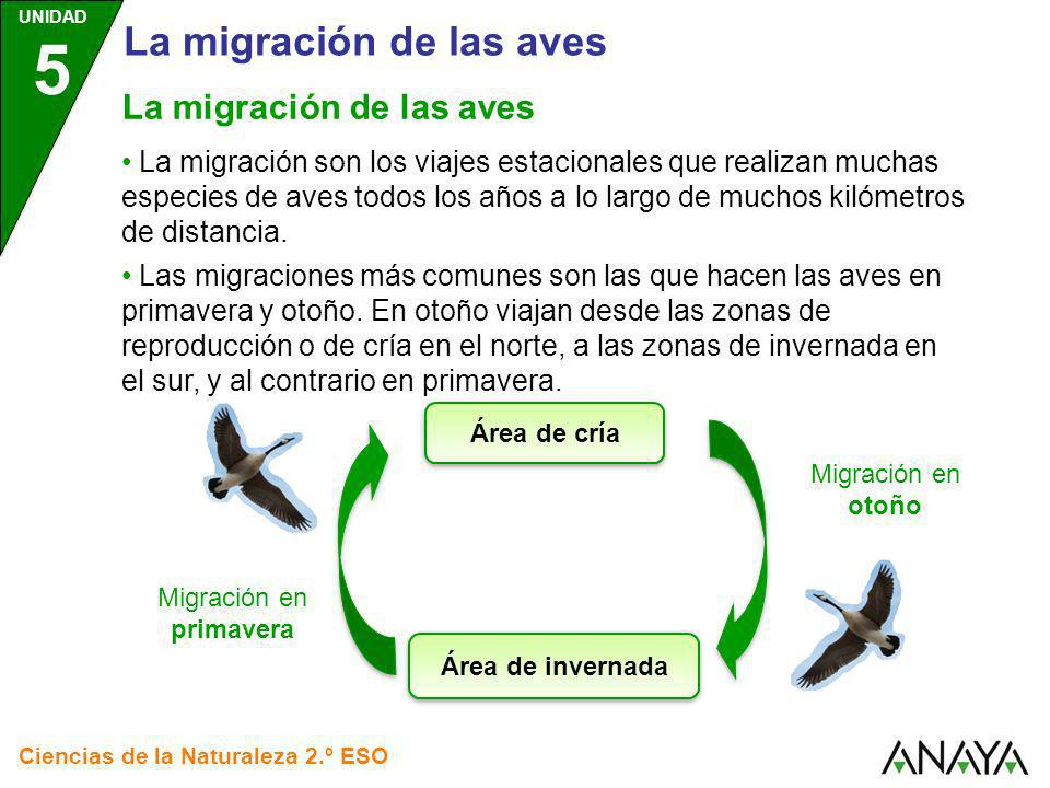 UNIDAD 5 Ciencias de la Naturaleza 2.º ESO La migración de las aves La migración son los viajes estacionales que realizan muchas especies de aves todo