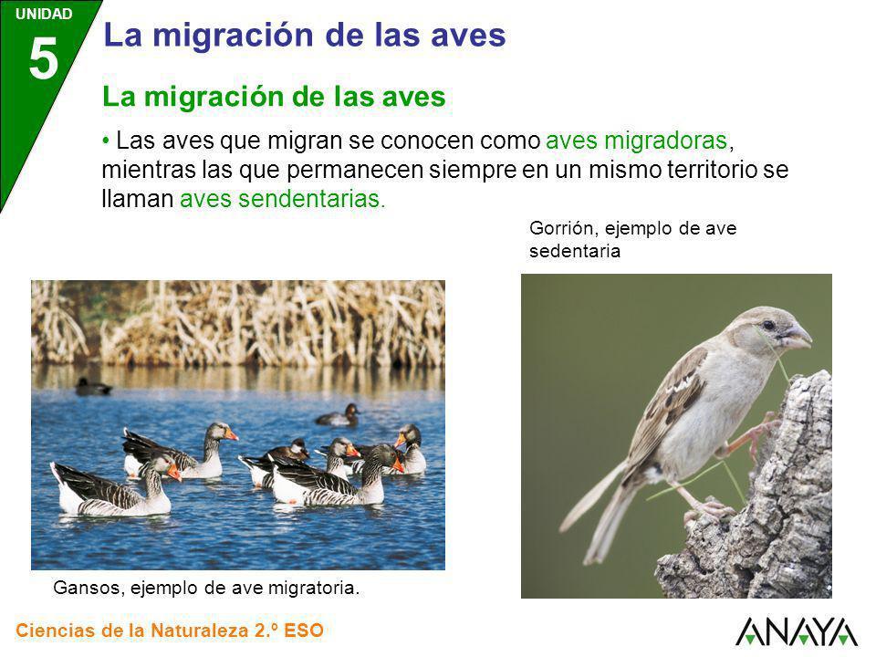 UNIDAD 5 Ciencias de la Naturaleza 2.º ESO Las aves que migran se conocen como aves migradoras, mientras las que permanecen siempre en un mismo territ