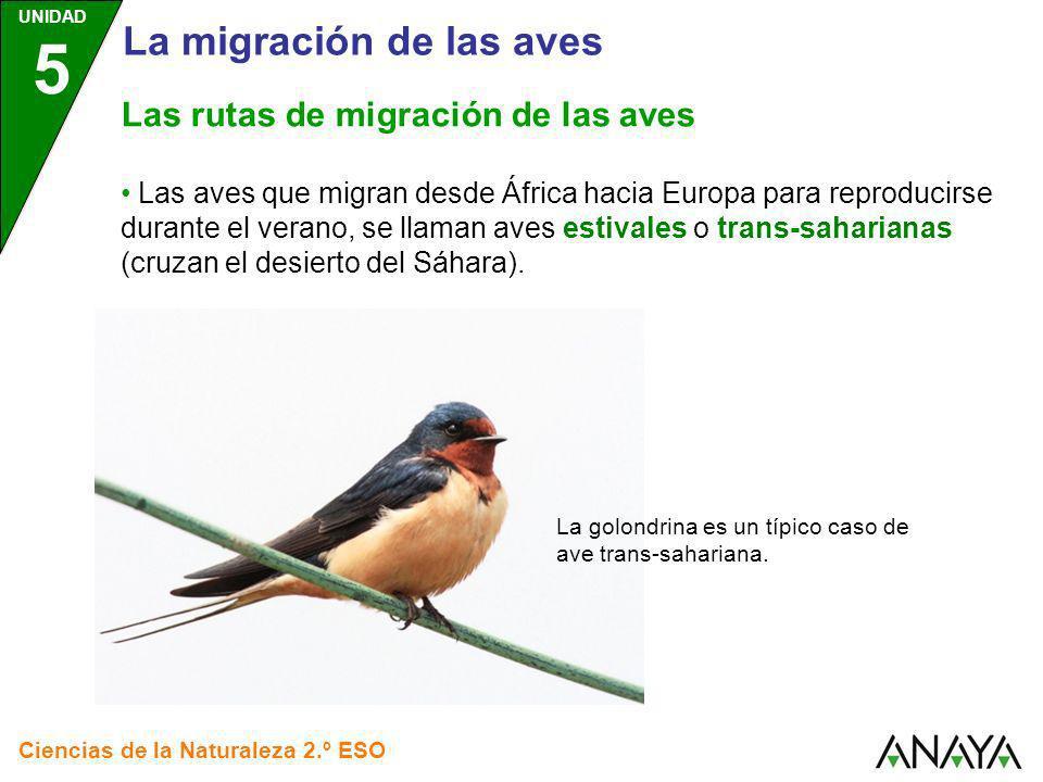UNIDAD 5 Ciencias de la Naturaleza 2.º ESO Las aves que migran desde África hacia Europa para reproducirse durante el verano, se llaman aves estivales