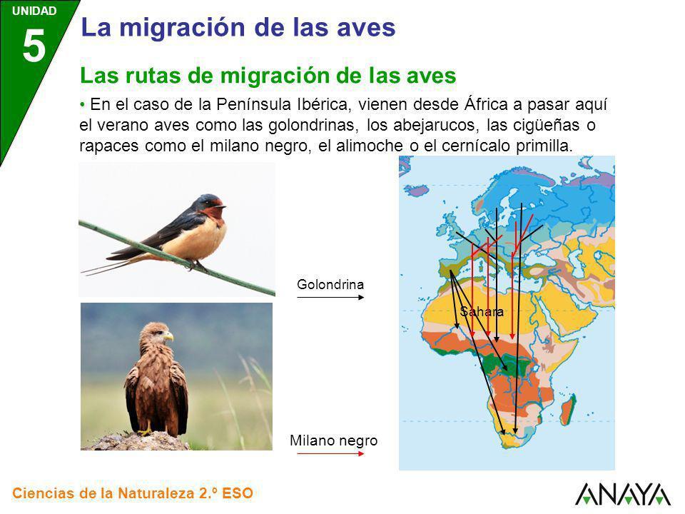 Sahara UNIDAD 5 Ciencias de la Naturaleza 2.º ESO En el caso de la Península Ibérica, vienen desde África a pasar aquí el verano aves como las golondr