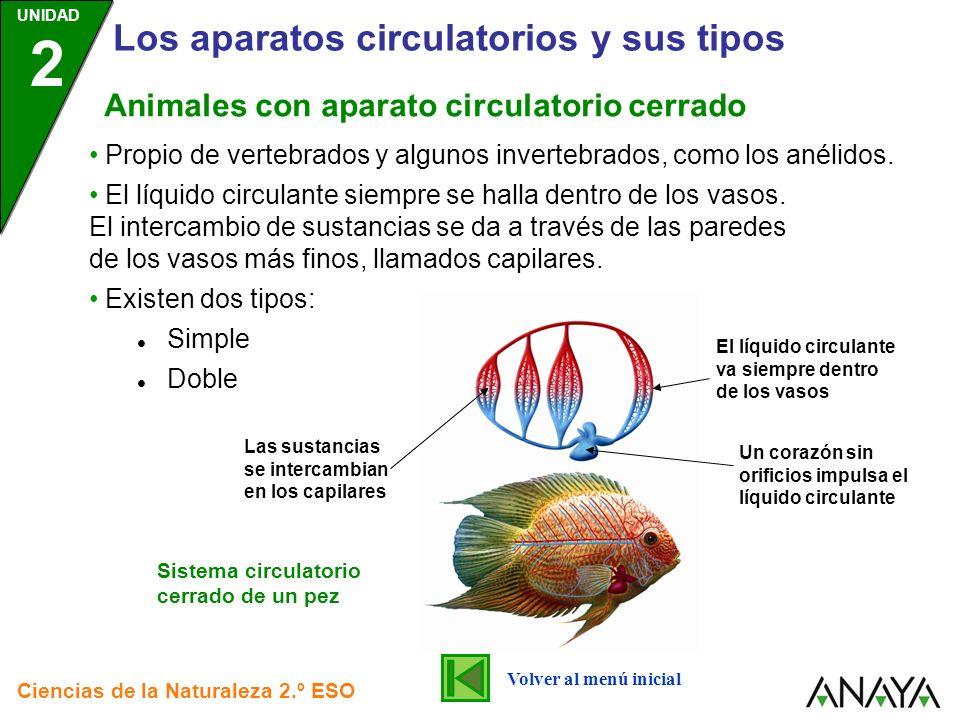 UNIDAD 2 Los aparatos circulatorios y sus tipos Ciencias de la Naturaleza 2.º ESO Propio de vertebrados y algunos invertebrados, como los anélidos. El