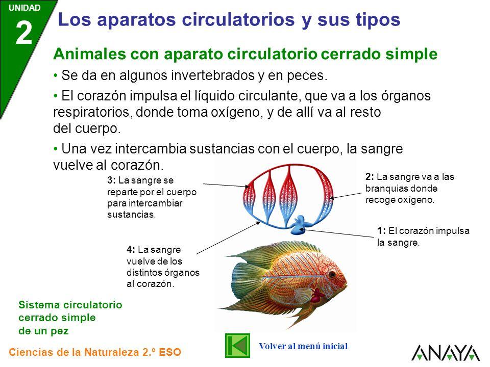 UNIDAD 2 Los aparatos circulatorios y sus tipos Ciencias de la Naturaleza 2.º ESO Se da en algunos invertebrados y en peces. El corazón impulsa el líq