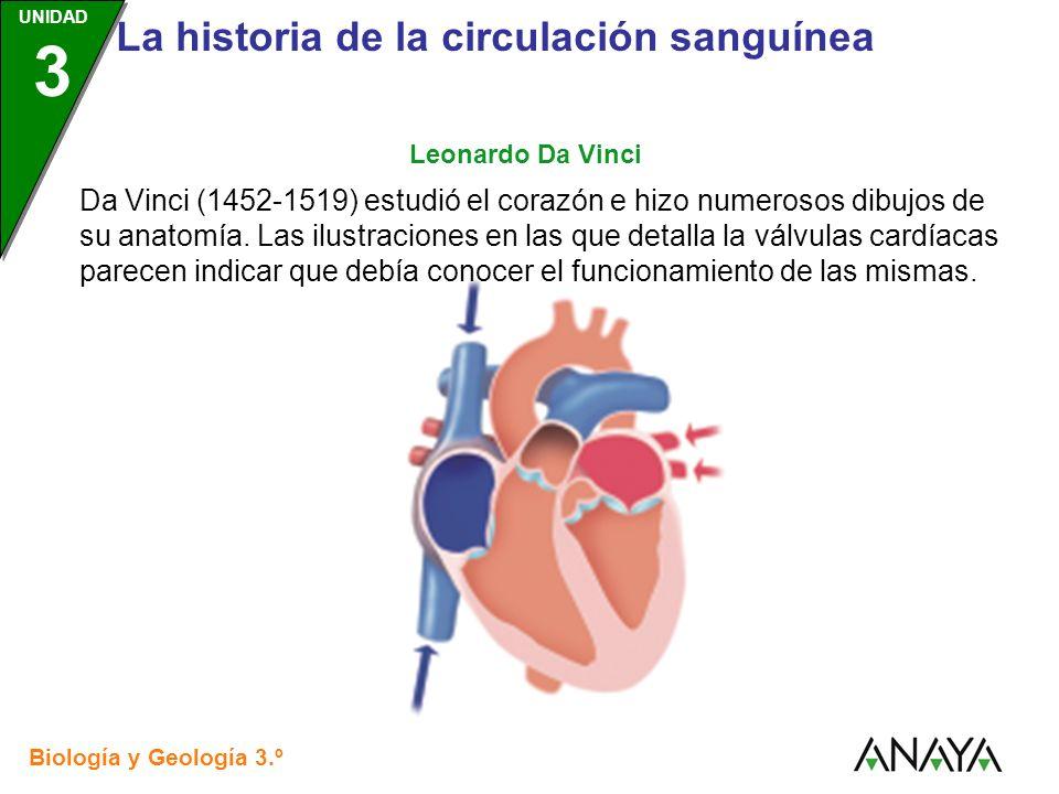 UNIDAD 3 Biología y Geología 3.º ESO UNIDAD 3 La historia de la circulación sanguínea Da Vinci (1452-1519) estudió el corazón e hizo numerosos dibujos