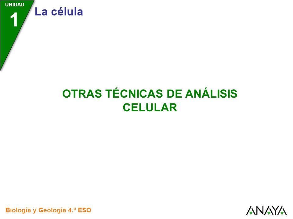 UNIDAD 1 La célula Biología y Geología 4.º ESO OTRAS TÉCNICAS DE ANÁLISIS CELULAR