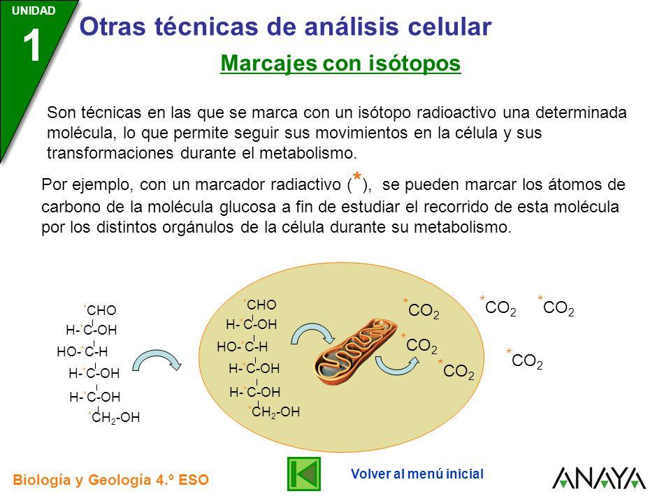 UNIDAD 3 Biología y Geología 4.º ESO UNIDAD 1 Otras técnicas de análisis celular Marcajes con isótopos Son técnicas en las que se marca con un isótopo