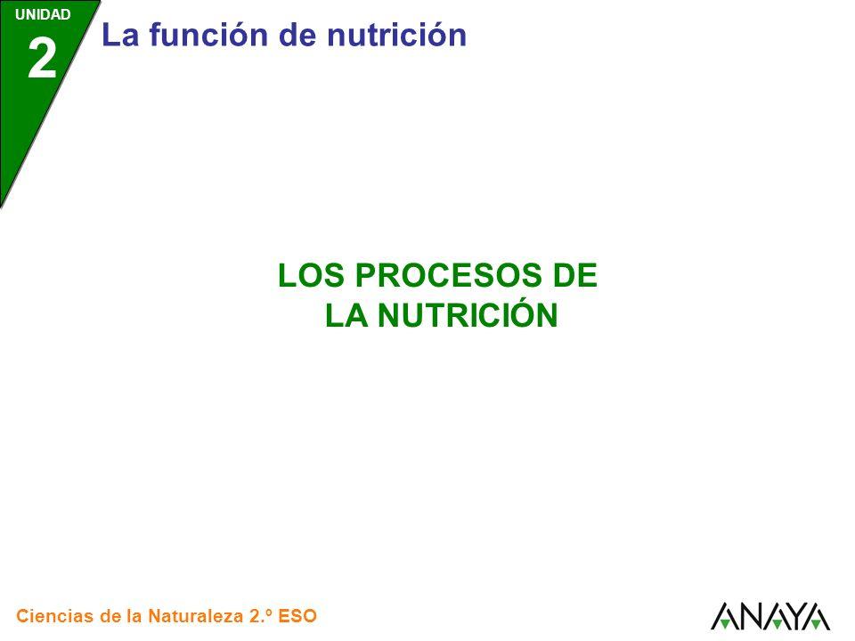 UNIDAD 2 Los procesos de la nutrición Ciencias de la Naturaleza 2.º ESO NUTRICIÓN OBTENCIÓN DE NUTRIENTES RESPIRACIÓN DISTRIBUCIÓN DE SUSTANCIAS EXCRECIÓN NUTRICIÓN AUTÓTROFA NUTRICIÓN HETERÓTROFA Pulsa sobre los recuadros para saber más