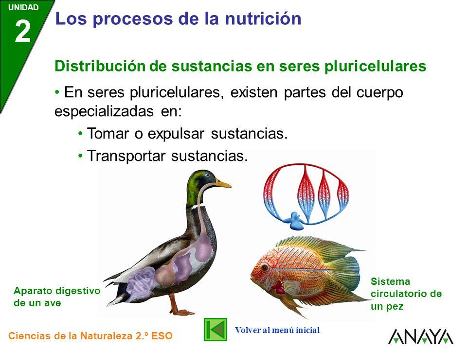 UNIDAD 2 Los procesos de la nutrición Ciencias de la Naturaleza 2.º ESO Distribución de sustancias en seres pluricelulares En seres pluricelulares, ex