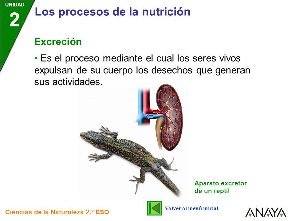 UNIDAD 2 Los procesos de la nutrición Ciencias de la Naturaleza 2.º ESO Excreción Es el proceso mediante el cual los seres vivos expulsan de su cuerpo