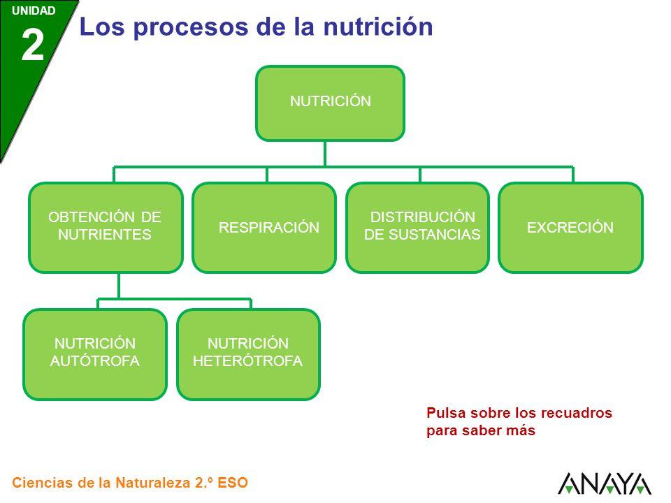 UNIDAD 2 Los procesos de la nutrición Ciencias de la Naturaleza 2.º ESO NUTRICIÓN OBTENCIÓN DE NUTRIENTES RESPIRACIÓN DISTRIBUCIÓN DE SUSTANCIAS EXCRE