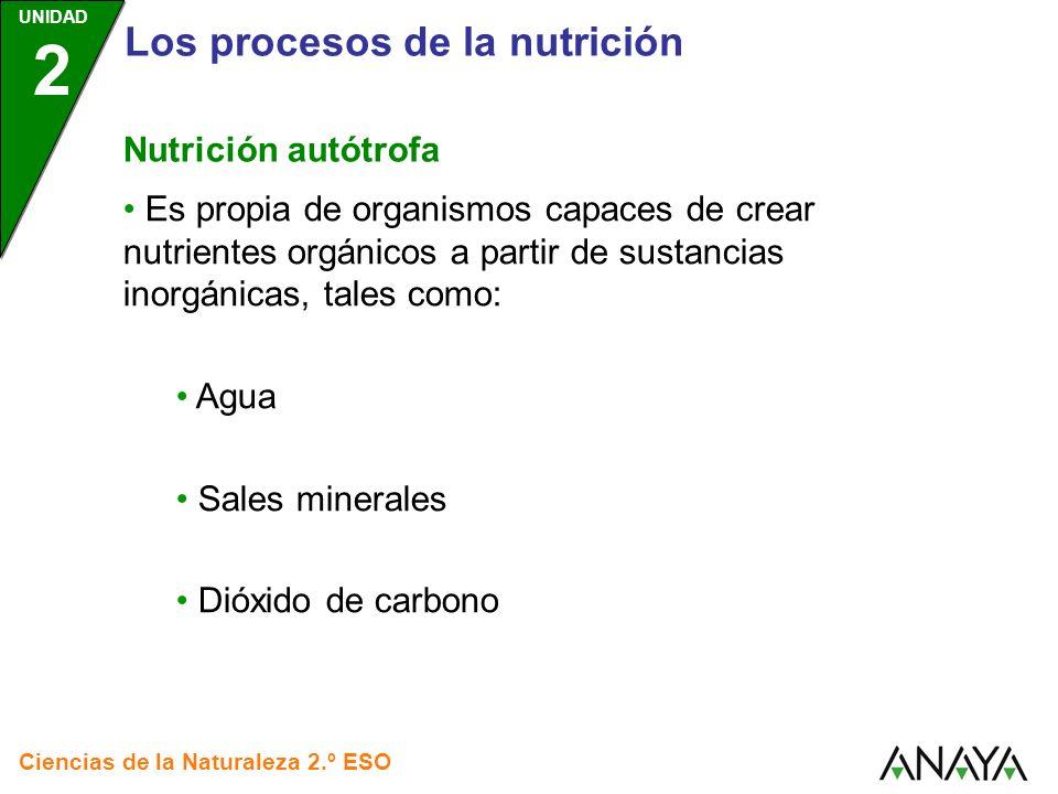 UNIDAD 2 Los procesos de la nutrición Ciencias de la Naturaleza 2.º ESO Nutrición autótrofa Un ejemplo, es la fotosíntesis.