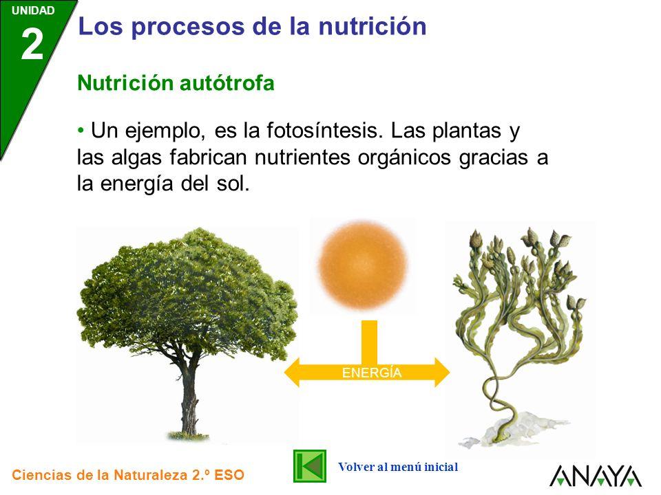 UNIDAD 2 Los procesos de la nutrición Ciencias de la Naturaleza 2.º ESO Nutrición autótrofa Un ejemplo, es la fotosíntesis. Las plantas y las algas fa