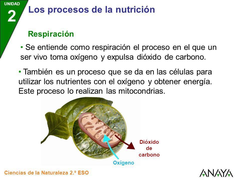 UNIDAD 2 Los procesos de la nutrición Ciencias de la Naturaleza 2.º ESO Respiración En dicho proceso, la mitocondria toma oxígeno, obtiene energía de los nutrientes, y expulsa dióxido de carbono.