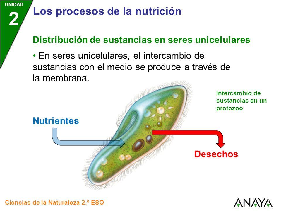 UNIDAD 2 Los procesos de la nutrición Ciencias de la Naturaleza 2.º ESO Distribución de sustancias en seres pluricelulares En seres pluricelulares, existen partes del cuerpo especializadas en: Tomar o expulsar sustancias.