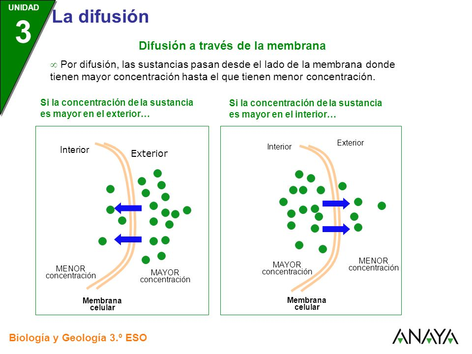 UNIDAD 3 Biología y Geología 3.º ESO UNIDAD 3 La difusión Interior Exterior Membrana celular MAYOR concentración MENOR concentración Interior Exterior