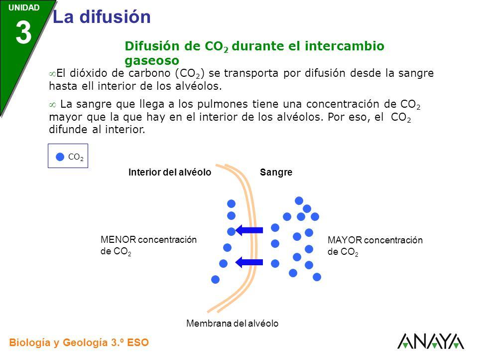 UNIDAD 3 Biología y Geología 3.º ESO UNIDAD 3 La difusión La sangre que llega a los pulmones tiene una concentración de CO 2 mayor que la que hay en e